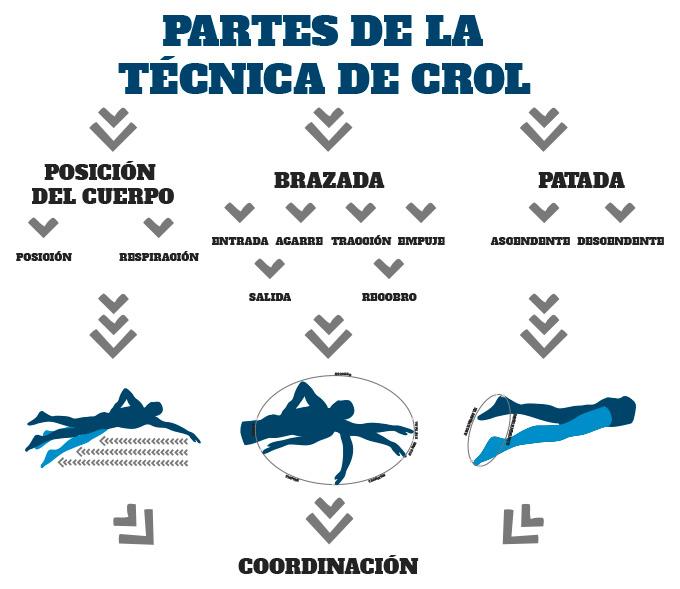 analisis de las partes de la técnica de crol en triatlón