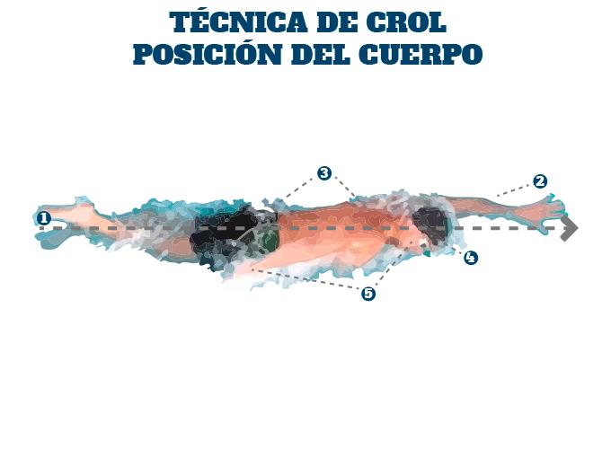 como es la posicion del cuerpo en la tecnica de crol en triatlon
