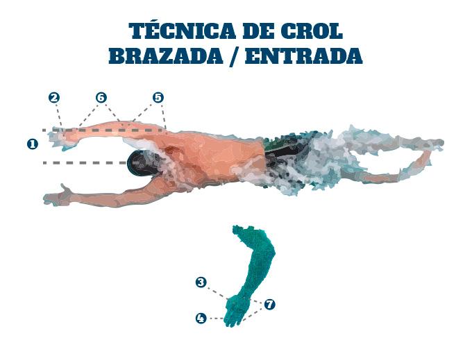 Técnica de Crol en Triatlón: la entrada en la brazada