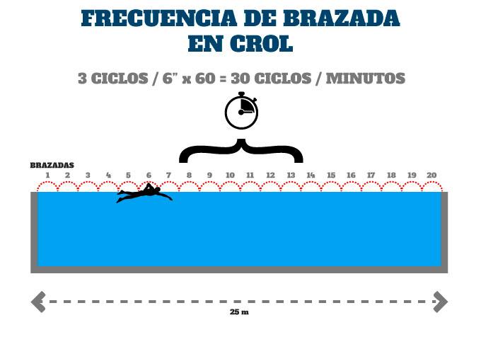 técnica de brazada en el nado crol medición de la frecuencia de brazada